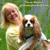 globaldogtraining profile image