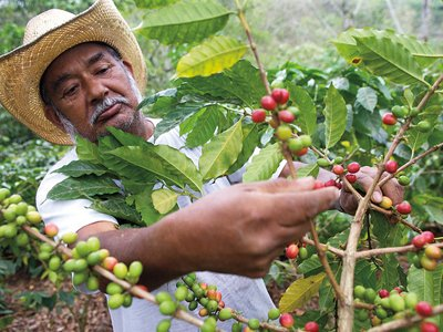 The hundred million coffee drinkers in the US are the livelihoods of tens of millions in developing countries, and although caffeine consumption is a problem, it will be difficult, if impossible to stop completely.