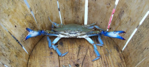 All About Crabbing