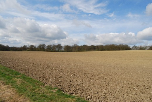 A large fallow field south of Hatchlands Farm