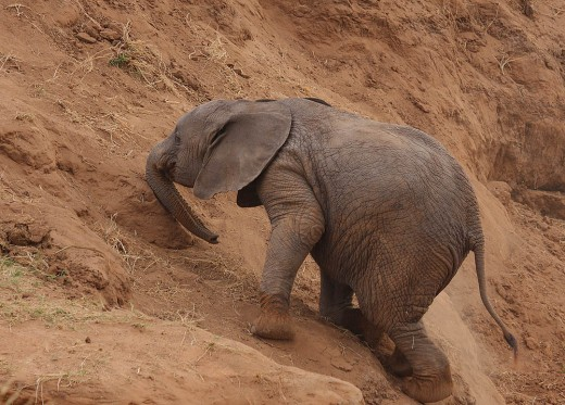 Uphill Struggle : That's the name of the adorable baby elephant inside every struggling actor...