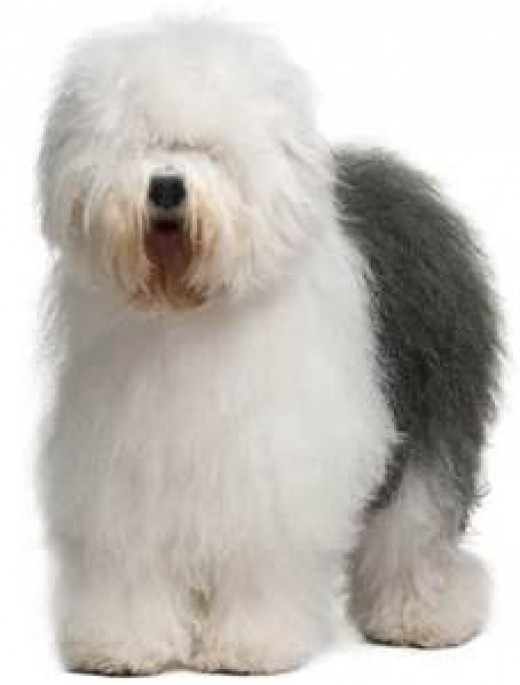 The Sheepdog; Aware, ever vigilant, always on Guard!