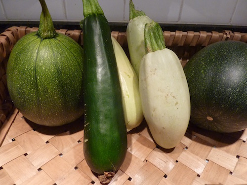 Tatume, Raven, Clairimore zucchini pictured here. Also look for beautiful golden yellow and green stripped.