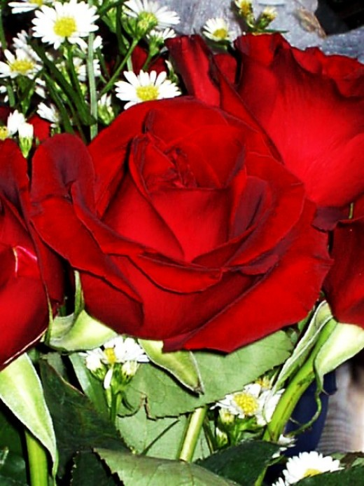 tarnished roses...