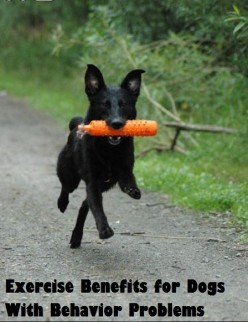 The Many Exercise Benefits for Dogs with Behavioral Problems