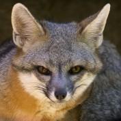 Kaycee Formont profile image