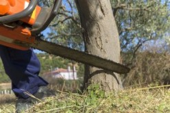 Chainsaw Buying Guide for Smart Consumers