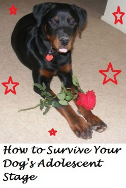 Tips to Survive Your Dog's Adolescent Stage