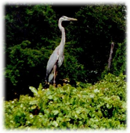down on the bayou...