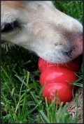 Improvising a Hand-Made Kong for Reactive Dogs