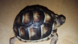 My Turtle Store Review