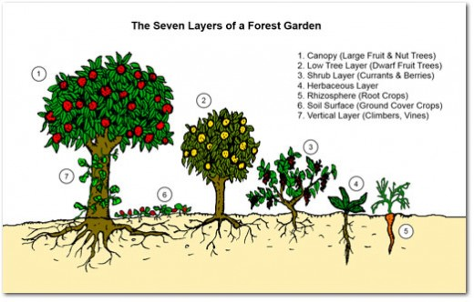 7 layers of a forest garden.