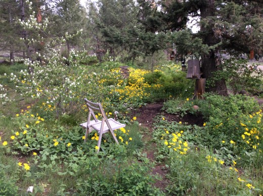 Montana summer wildflowers