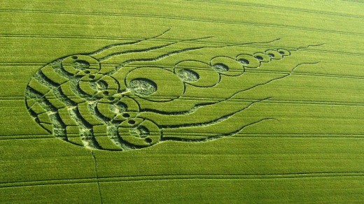 looks like an octopus...whom...a jelly fish maybe...silver orbs have been filmed creating these crop circles...