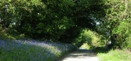 Cornish Hedges