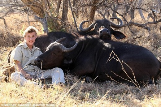 Luke has spent months in close proximity with these buffaloes to gain their trust