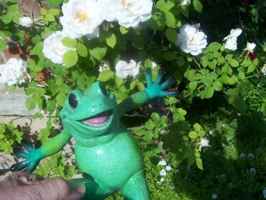 Hi, I'm an obnoxious frog, with a magnetic personality...
