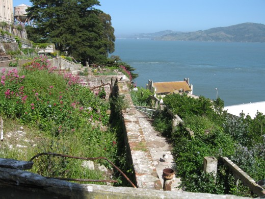 The Alcatraz gardens have come back to life