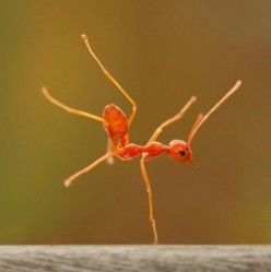 If Ants Could Do Yoga: A Follow-Up Discussion