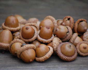 Acorns figure heavily into many Pagan paths, Druidry especially. They are featured in my group's Mabon Ritual to represent blessings we intend to grown.