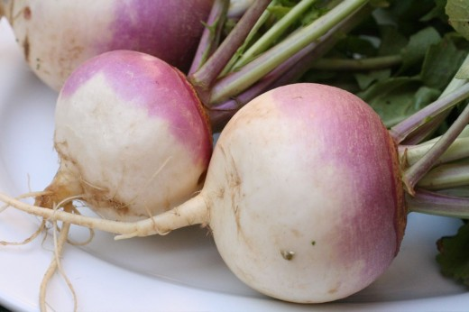 Turnip Bulbs