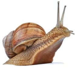 The most common types of snails worth mentioning