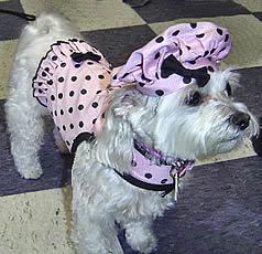 Tuffy's styling in Pink Polka Dots.