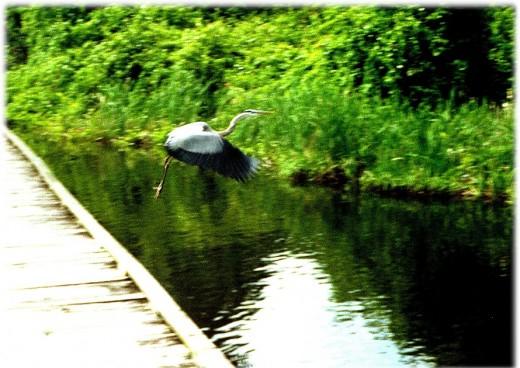 enchanted swamp of beautiful sounds...