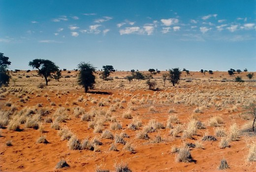 The Kalahari Desert. where the !Kung San Tribe dwell (a tough and uncompromising environment)
