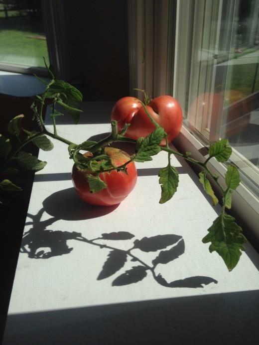 Tomato art.
