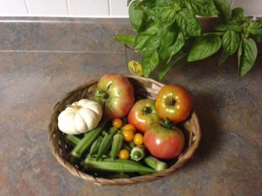 Tomatoes, pumpkin, okra, basil.