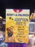 Adoption Events Supported by Rescue Organizations and Pet Vendors Meet Standards in the No Kill Equation