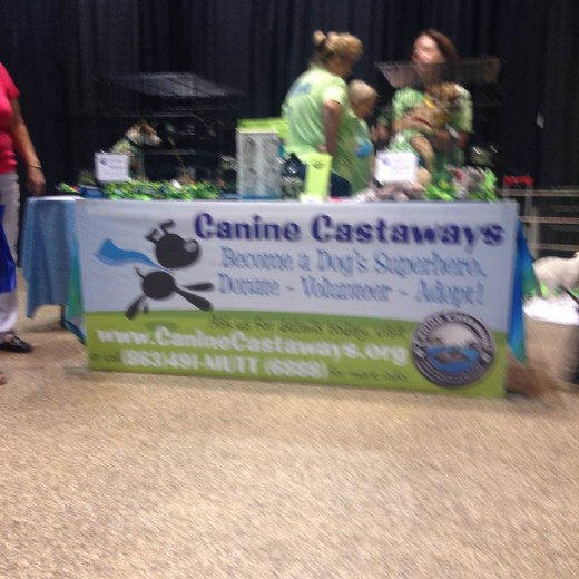Canine Castaways participation