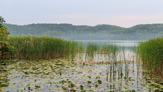 Lake Schermützelsee as seen from the garden of the Brecht/Weigel Museum in Buckow (Märkische Schweiz), Brandenburg, Germany