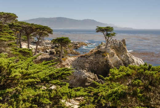 "The ""Lone Cypress"" (a Monterey Cypress Cupressus macrocarpa) at 17 Mile Drive, Monterey, California."