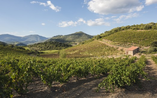 Hills and vineyards in the Orb River Valley.