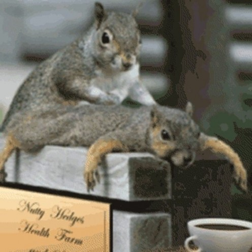 You don't have to be jealous of this squirrel, ya know.