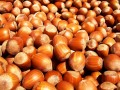 Why Tree Nuts Are So Good For You--Nutritious Morsels Offer Phytonutrients, Antioxidants, Plant Sterols