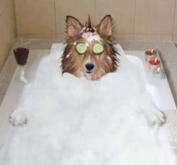 Dog Grooming Supplies and Tips