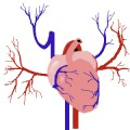 Plaque Attack and Your Heart