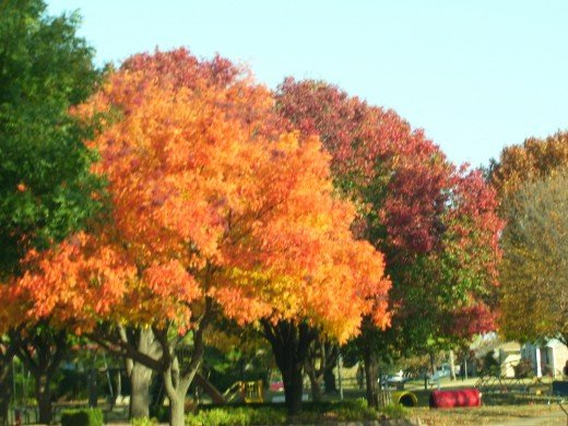 Autumn is a golden harvest of beauty.