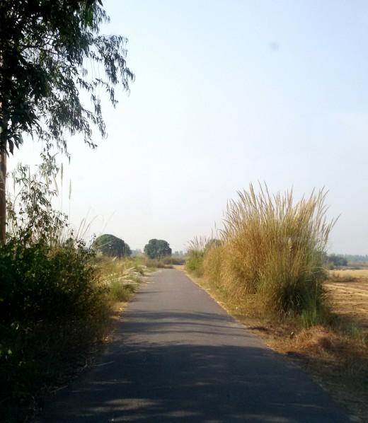 Road to Rudravarta Tirtha 2