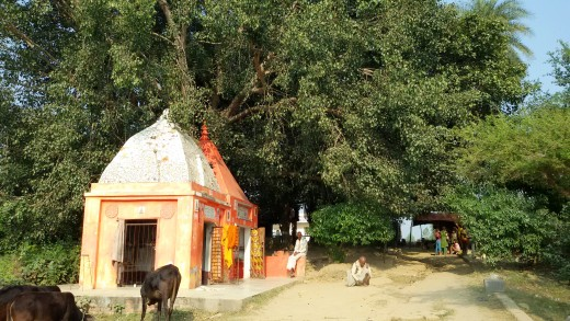 Two temples under the Pipul tree