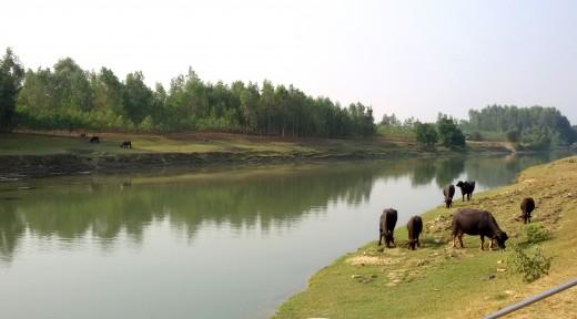 Gomati river at Rudravarta Tirtha