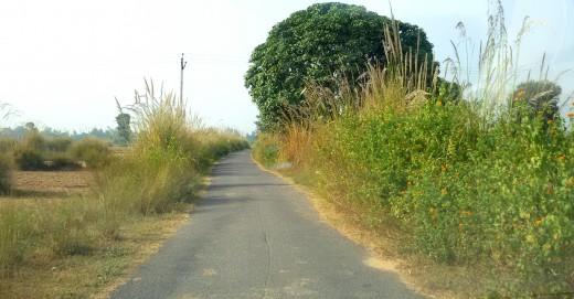 Road to Rudravarta Tirtha 1