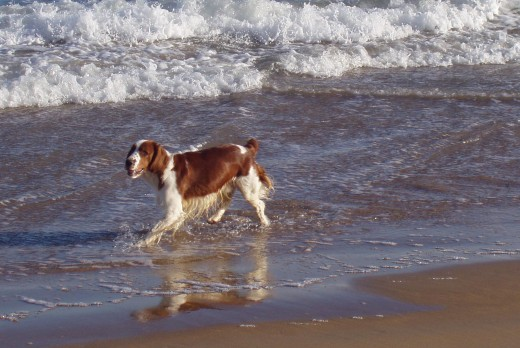Dogs totally love being at the beach. If they could speak, they wouldn't be able to ask for anything better.