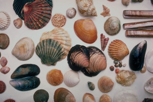 How many seashells have you collected?