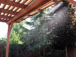 Misting systems can be installed right on to your patio cover like this pergola.  Photo by http://www.flickr.com/photos/moomoocow/25533827/