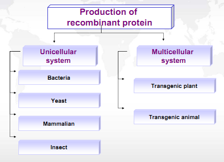 different expression systems for production of recombinant proteins