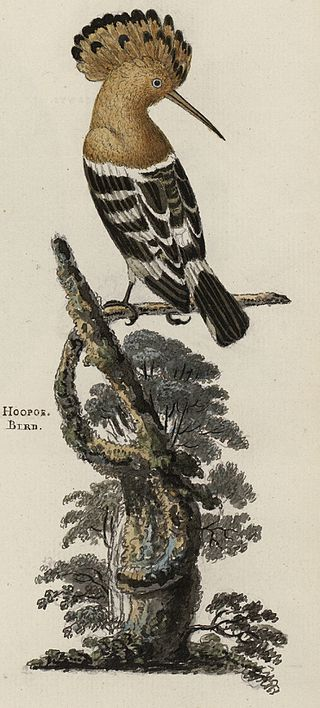 By Thomas Pennant - This image is available from the National Library of Wales, Public Domain, https://commons.wikimedia.org/w/index.php?curid=46334625